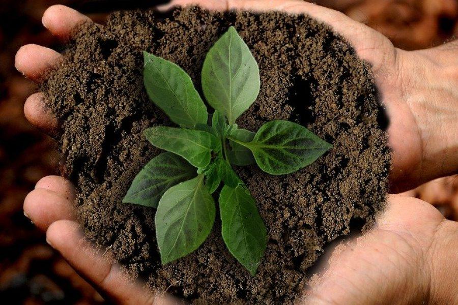 Nutrire il pianeta, alimentare la speranza.